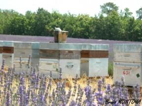 Les ruchés